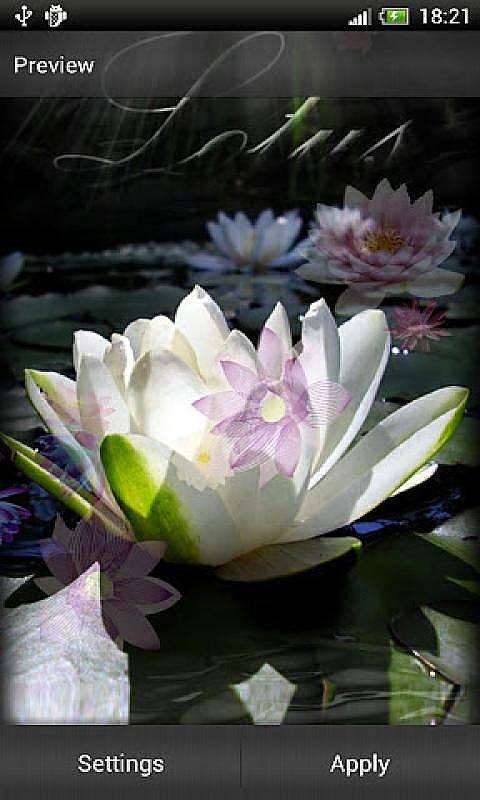 莲花 动态壁纸
